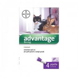 Advantage s.o. 80 Gatto/Coniglio